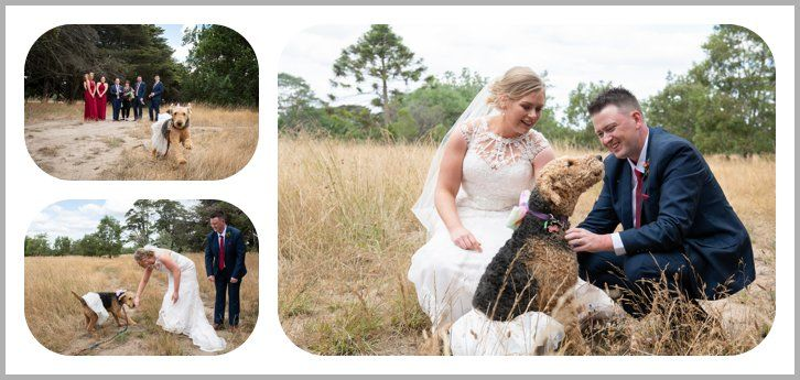 Wedding couple photos and dog