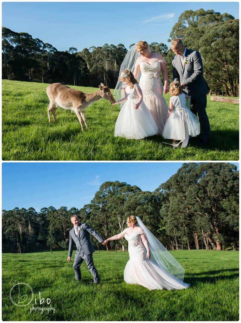 Wedding photographer Gum Gully Farm